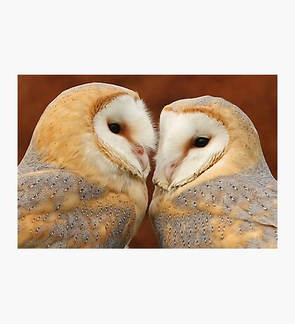 A pair of cuties Photographic Print