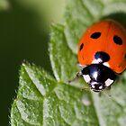 Little Lady Bug by Lynne Morris