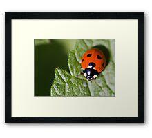 Little Lady Bug Framed Print