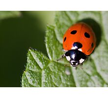 Little Lady Bug Photographic Print