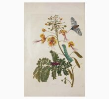 Metamorphosis insectorum surinamensium Maria Sibylla Merian 1705 0144 Insects of Surinam_jpg One Piece - Long Sleeve