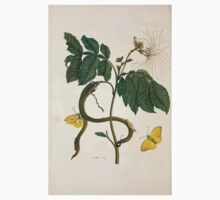 Metamorphosis insectorum surinamensium Maria Sibylla Merian 1705 0162 Insects of Surinam_jpg One Piece - Long Sleeve
