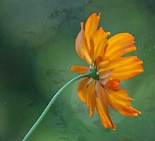 Cosmos in the Cosmos by Eileen McVey