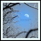 Moon Rise by Layla Morgan Wilde
