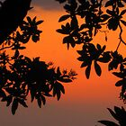 Ohia Sunset by reneecettie
