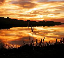Sunset Cattails by Cupertino