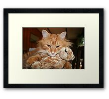 Orange Tabby Cat with His Stuffed Buddy Framed Print