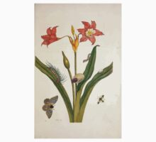 Metamorphosis insectorum surinamensium Maria Sibylla Merian 1705 0075 Insects of Surinam_jpg Baby Tee