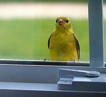 Little Bird on the Window Sill by Brian Gaynor