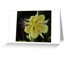 Colombine and Freeloader Greeting Card