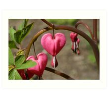 Dangling Hearts Art Print