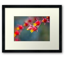 Tiny Alpine flower Framed Print