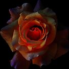 Rose on Fire by saseoche