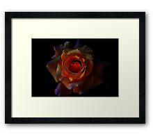 Rose on Fire Framed Print