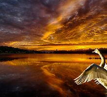 Swan Lake by LudaNayvelt