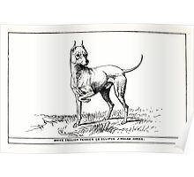 All about dogs a book for doggy people Charles Henry Lane 1900 0243 White English Terrier_jpg Poster