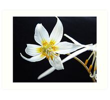 Fawn Lily Art Print