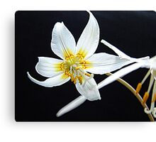 Fawn Lily Canvas Print