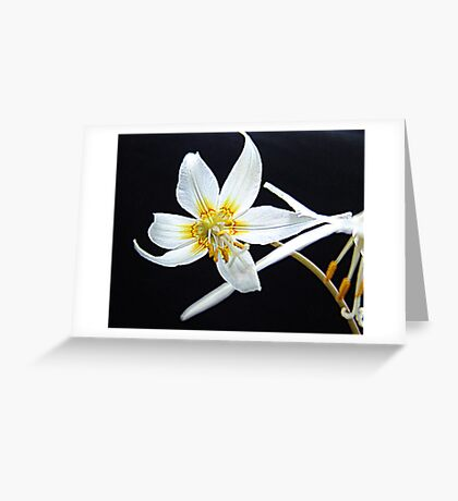 Fawn Lily Greeting Card