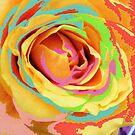 Rose Multicolors. by Vitta