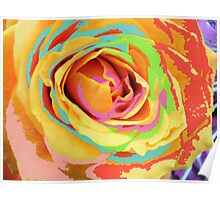 Rose Multicolors. Poster