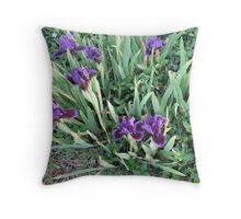 Purple Iris Patch of Glory Throw Pillow
