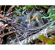 Birding ... Photographic Print