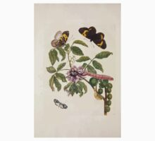 Metamorphosis insectorum surinamensium Maria Sibylla Merian 1705 0114 Insects of Surinam_jpg Kids Tee