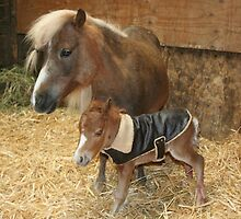 New born mini colt by SKNickel