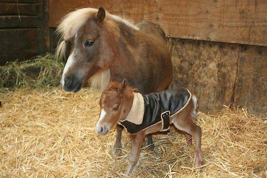 New born mini colt by SKNickel