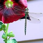 Hollyhock Blossom with Dragonfly by Elizabeth Bennefeld