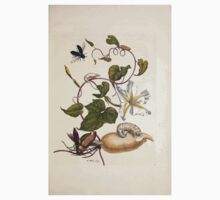 Metamorphosis insectorum surinamensium Maria Sibylla Merian 1705 0159 Insects of Surinam_jpg Baby Tee