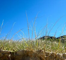 Sandon Sand Dune Grass by AngieB