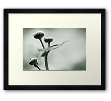 epitome of form Framed Print