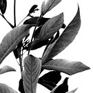 """PURPLE LEAVES IN THE WIND"" (B&W) - macro by Justine Walke"