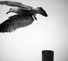 On The Hunt by Stephanie Hillson