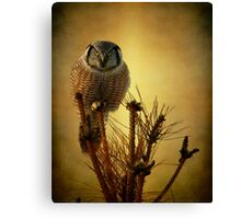 The great stare down Canvas Print
