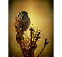 The great stare down Photographic Print