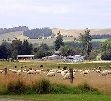 Farming New Zealand by coffeebean