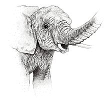 Juvenile Elephant by V.E. Fulford