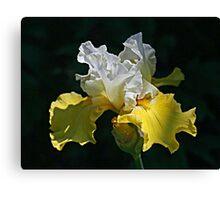 Two-Tone Iris Canvas Print