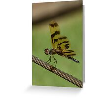 On the high-wire Greeting Card