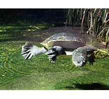 Flying Turtle Photographic Print