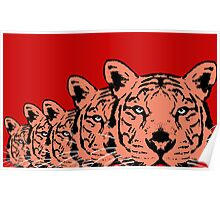 Big Cat in a row Poster