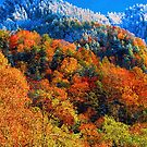 THE CHIMNEY TOPS AUTUMN by Chuck Wickham