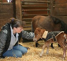 My Friend Valerie and mini colt and pony's by SKNickel