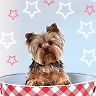 Bitzy, the Patriotic Yorkie by susan stone