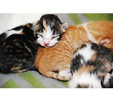 Itty Bitty Kitty Photographic Print