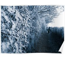 Frosty Path Poster