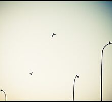 Crows and lamposts by seethroughdog